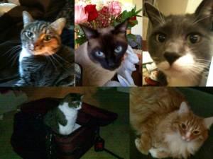 Paula's Cats
