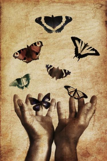 butterflies-843298_1280